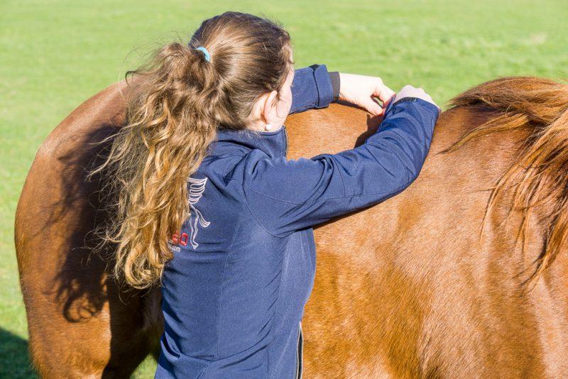 Osteopathie voor paarden en honden